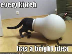 every kitteh  has a bright idea