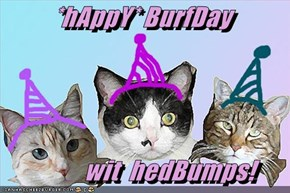 *hAppY* BurfDay              wit  hedBumps!
