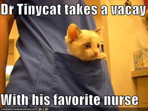 Dr Tinycat takes a vacay  With his favorite nurse