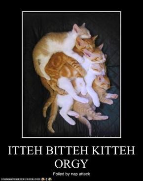 ITTEH BITTEH KITTEH ORGY