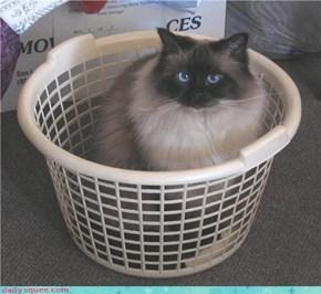 Wash Day Helper