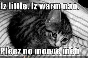 Iz little. Iz warm nao.  Pleez no moove meh