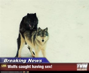 Breaking News - Wolfs caught having sex!
