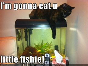 I'm gonna eat u  little fishie!