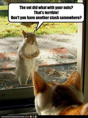 Squirrels just don't get it.