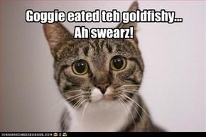 Goggie eated teh goldfishy... Ah swearz!