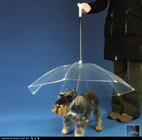 Keep Your Goggies Dry With the Dogbrella!