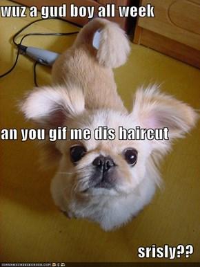 wuz a gud boy all week  an you gif me dis haircut srisly??