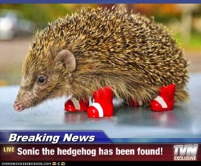 Breaking News - Sonic the hedgehog has been found!