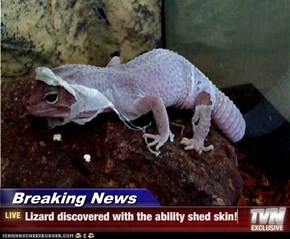 Breaking News - Lizard discovered with the ability shed skin!