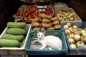 Taters,1$ cat,2$