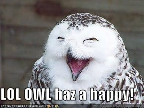 LOL OWL haz a happy!