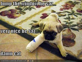 Jump the window he saz... very nice he saz... damn cat