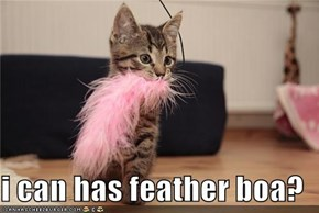 i can has feather boa?