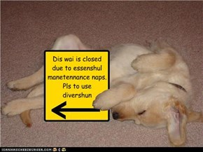Dis wai is closed  due to essenshul manetennance naps. Pls to use divershun