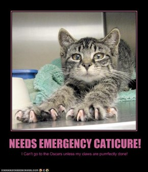 NEEDS EMERGENCY CATICURE!