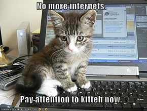 No more internets.  Pay attention to kitteh now.