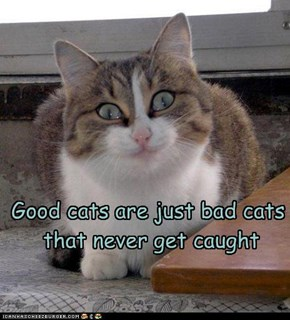 Good cats are just bad cats  that never get caught