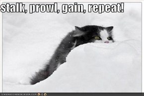 stalk, prowl, gain, repeat!