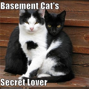 Basement Cat's  Secret Lover
