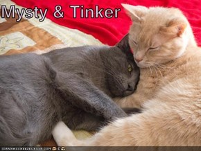 Mysty & Tinker