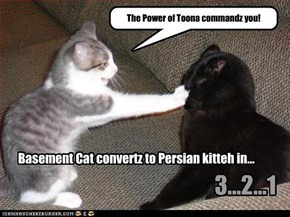 Basement Cat convertz to Persian kitteh in...