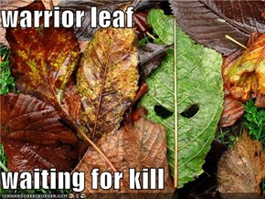 warrior leaf  waiting for kill
