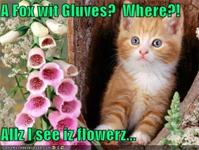 A Fox wit Gluves?  Where?!  Allz I see iz flowerz...