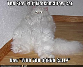 "The Stay Puft Matshmallow Cat  Now ""WHO YOU GONNA CALL?"""