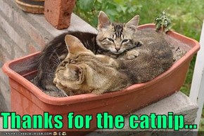 Thanks for the catnip...
