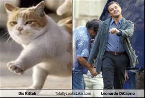 Dis Kitteh Totally Looks Like Leonardo DiCaprio