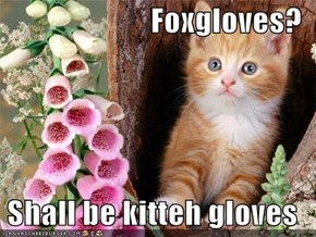 Foxgloves?  Shall be kitteh gloves