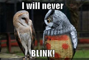 I will never  BLINK!