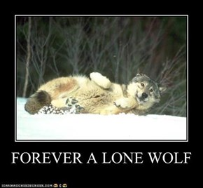 FOREVER A LONE WOLF