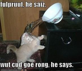 fulpruuf, he saiz.  wut cud goe rong, he says.