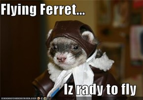 Flying Ferret...  Iz rady to fly