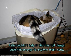 Lawdy Ma! Derz a coon in the trash!
