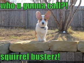 who u gunna call?!  squirrel busterz!