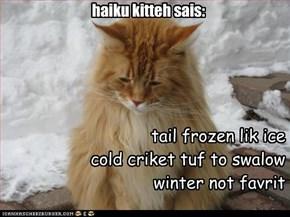 haiku kitteh sais: