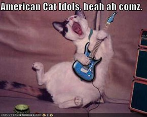 American Cat Idols, heah ah comz.