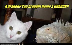 A dragon? You brought home a DRAGON?