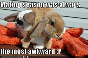 Mating season was always   the most awkward :P