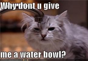 Why dont u give  me a water bowl?