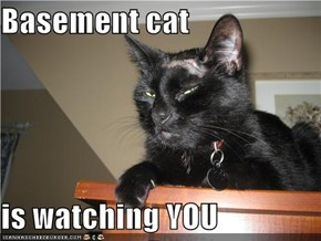 Basement cat  is watching YOU