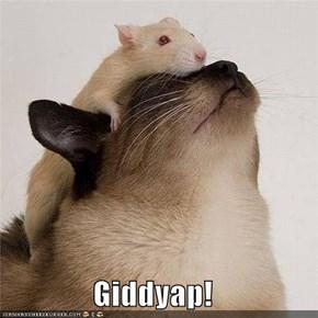 Giddyap!