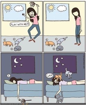 Kitteh Komic of teh Day: Hoomin Playtime vs. Kitteh Playtime