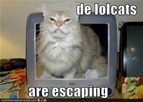 de lolcats  are escaping