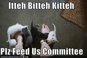 Itteh Bitteh Kitteh  Plz Feed Us Committee
