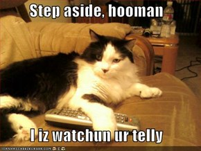 Step aside, hooman  I iz watchun ur telly
