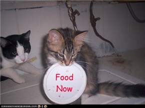 Food  Now